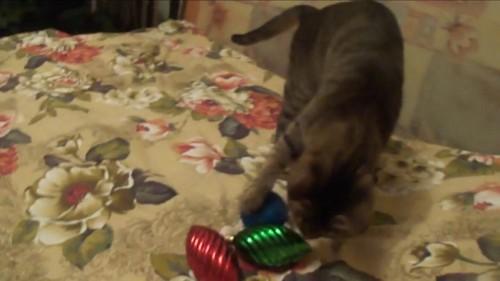 オーナメントで遊ぶ猫