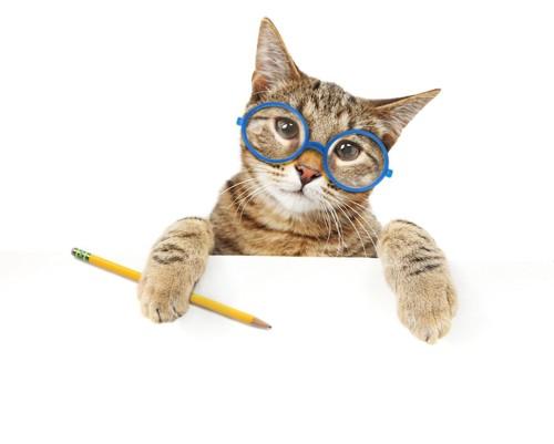 眼鏡をかけて鉛筆をもつ猫