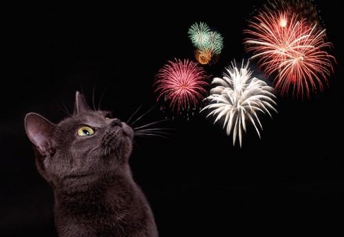 花火を見つめる黒猫