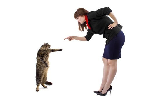 立ち上がる猫を指差している女性