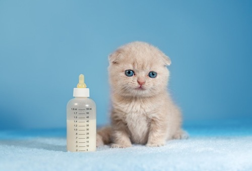 哺乳瓶と子猫