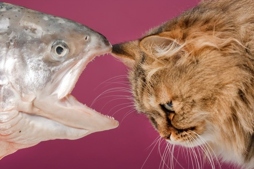 鮭と猫の横顔