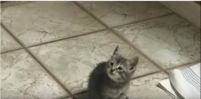 床に置かれた子猫