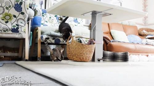椅子の上と下にいる猫