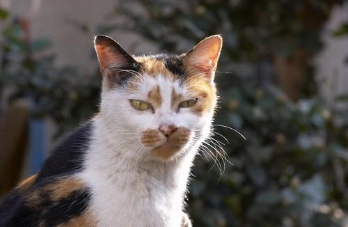 不満そうな表情でこちらを見る猫