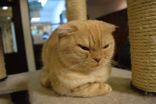 キャットタワーの上でしかめっ面をしている猫