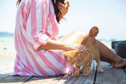女性に撫でられてお尻を上げる猫