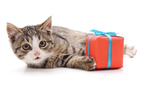 プレゼントを持って寝転ぶ猫