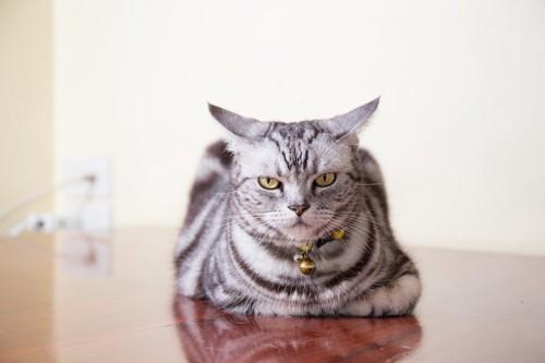 不機嫌そうな表情で動かない猫