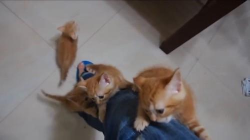 まとめて登る猫