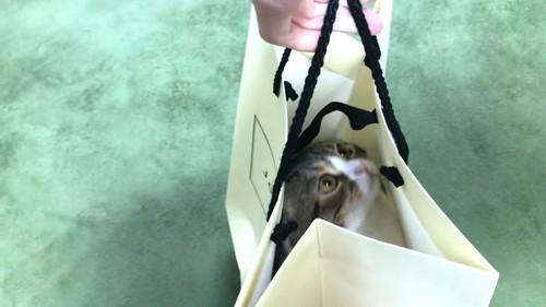 袋の中に入って持ち上げられる猫