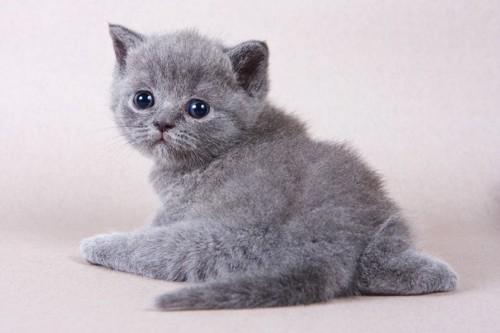 お尻を向ける子猫
