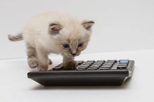 計算機に前足を乗せる子猫