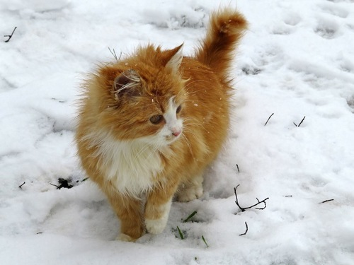 雪の上で片手を上げている猫