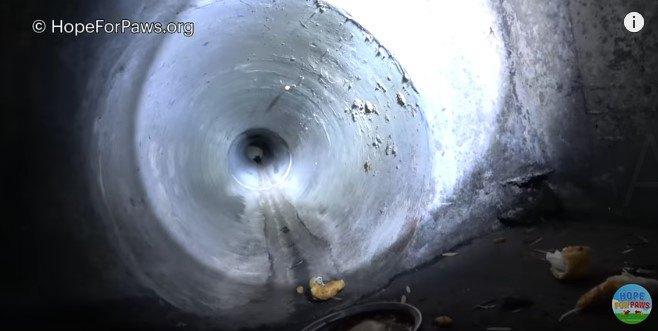 排水管の奥にいる子猫