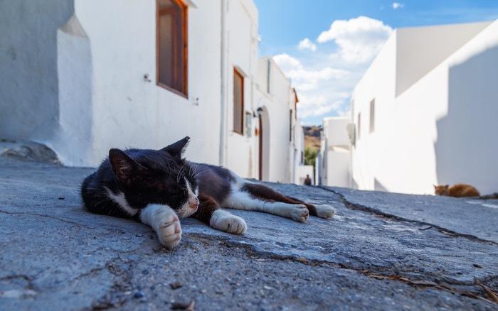 道で寝ている猫