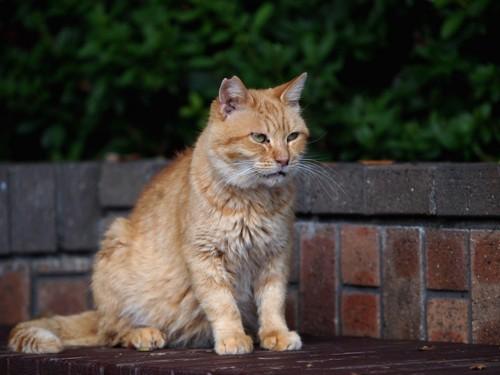 外のベンチに座る地域猫