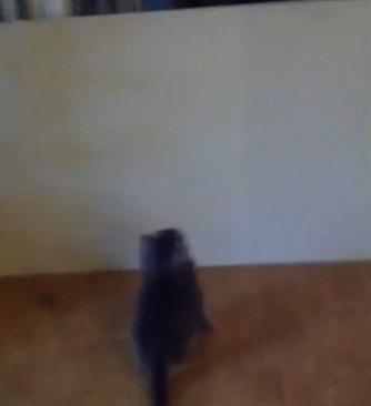 壁を見る子猫