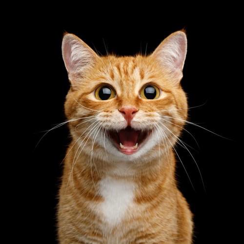 楽しい表情の猫