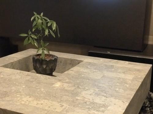 観葉植物のはまったテーブル
