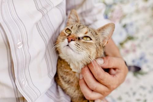 抱かれて見上げる猫