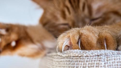 爪を出して寝ている猫