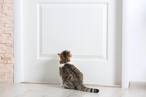 ドアを見上げている子猫