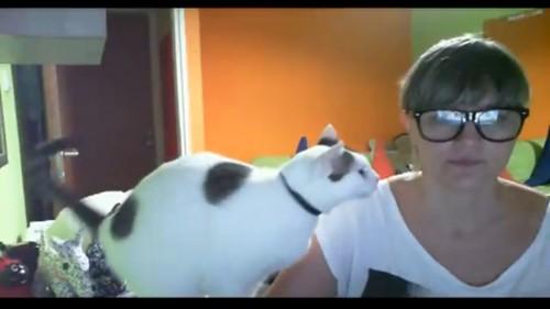飼い主に寄ってくる猫