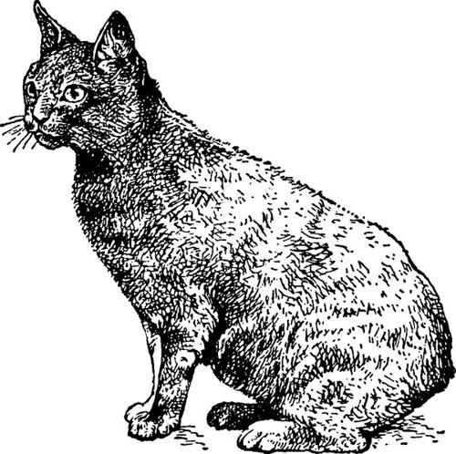 黒猫のデッサン画