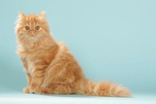 座ってこちらを見つめる猫