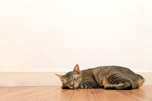 壁の前で寝る猫