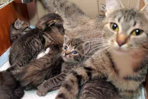 母猫と仔猫たち