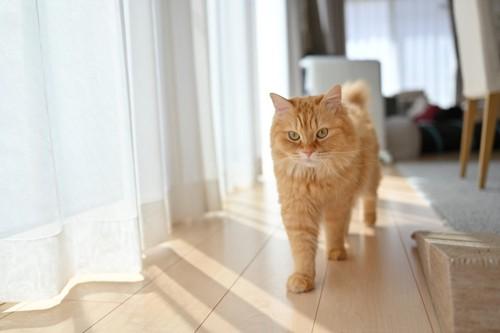 窓辺を歩く猫