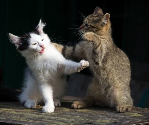 仲良くじゃれあう猫たち