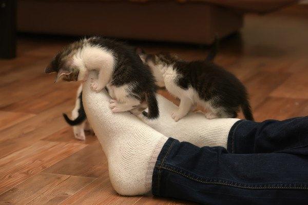 人の足で遊ぶ二匹の猫