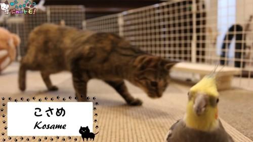 インコと焦げ茶色の猫
