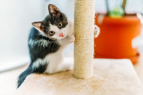 キャットタワーで爪研ぎをする猫