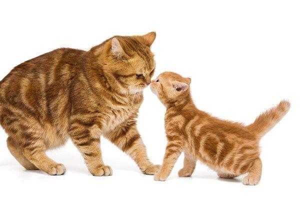 鼻を近づける猫2匹