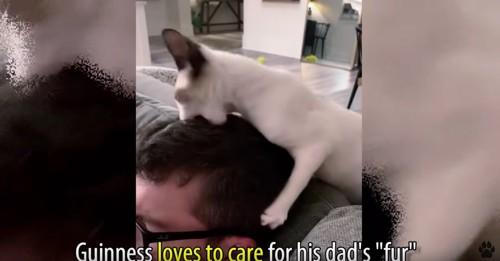 男性の頭に噛み付く猫