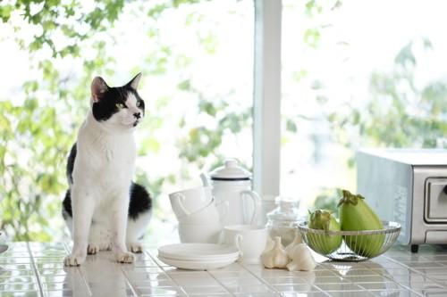 窓と白い食器と猫