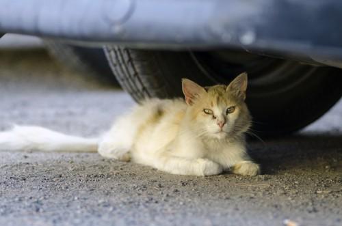 車体の下の猫