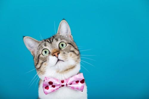 首にリボンをつけた猫