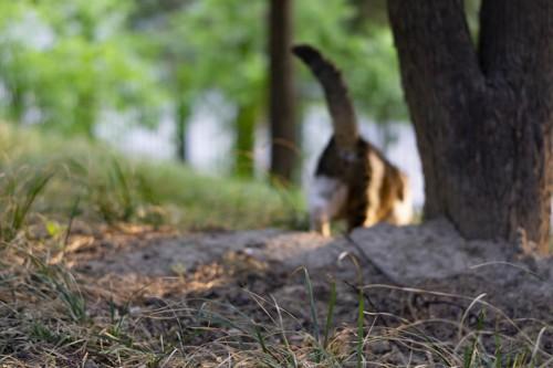 家出する猫