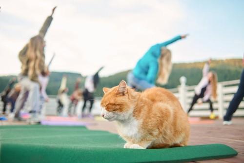 体操をする人々と猫