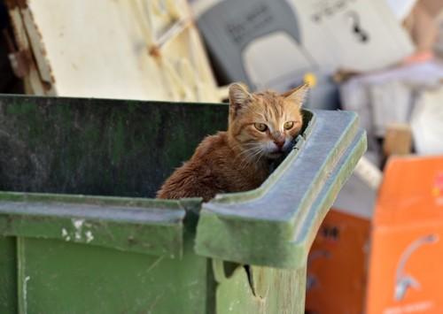 ゴミ箱にいる猫