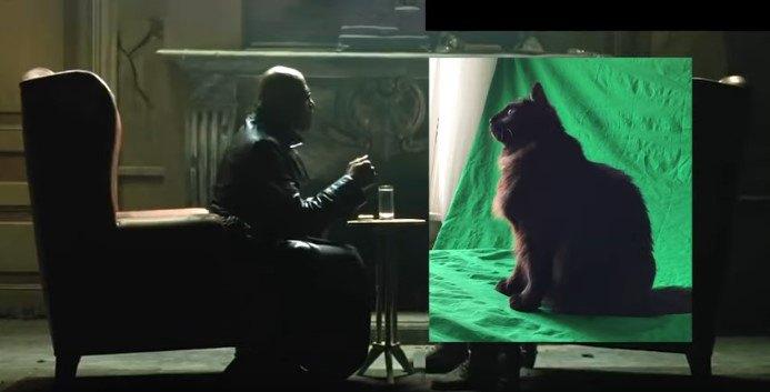 対面する人とアウル・キティ
