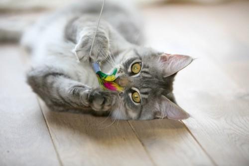 猫じゃらしにじゃれる猫