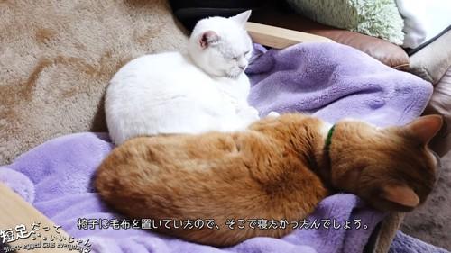 毛布の上にいる白猫と茶色の猫
