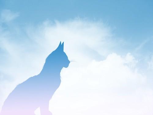 青空に浮かぶ猫のシルエット