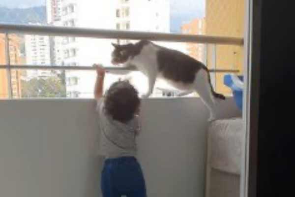 左手も降ろさせようとする猫
